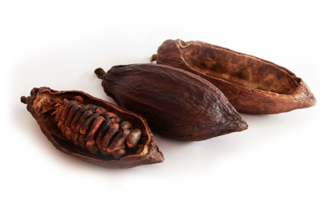 Cacao Bean Review