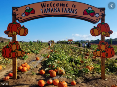Second Grade Field Trip to Tanaka Farms