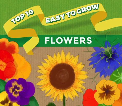 Top Ten Easy to Grow Flowers
