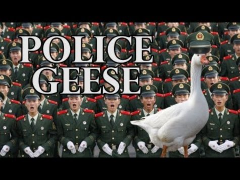 Chinese Police use Geese squads