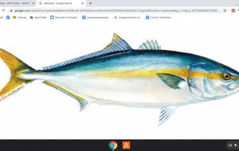 feburary/march Yellowtail and Bluefin bite